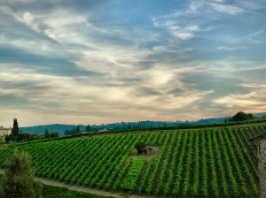 Viñedos sobre las colinas toscanas. Foto de Giampaolo Maconing.