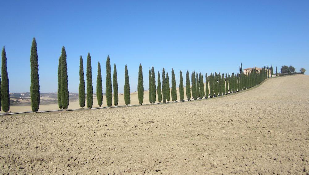 Los cipreses protegen los caminos que llevan a las casas solariegas en mitad de campos pensativos. ©María Calvo.